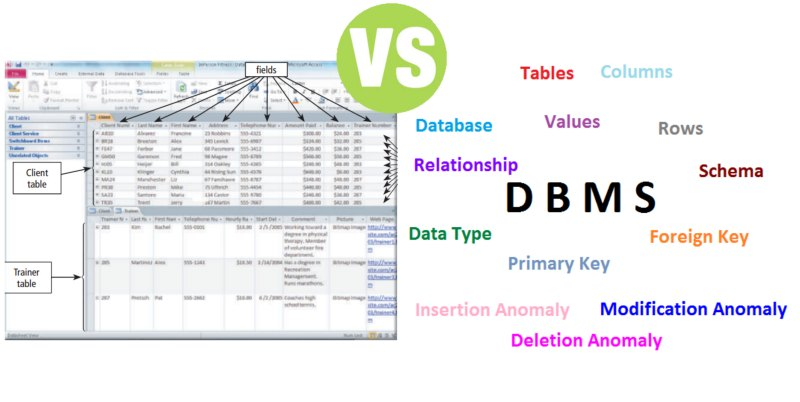 Difference Between Database and DBMS