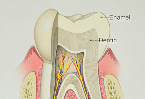 Difference Between Enamel and Dentin
