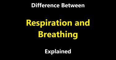 Difference Between Respiration and Breathing